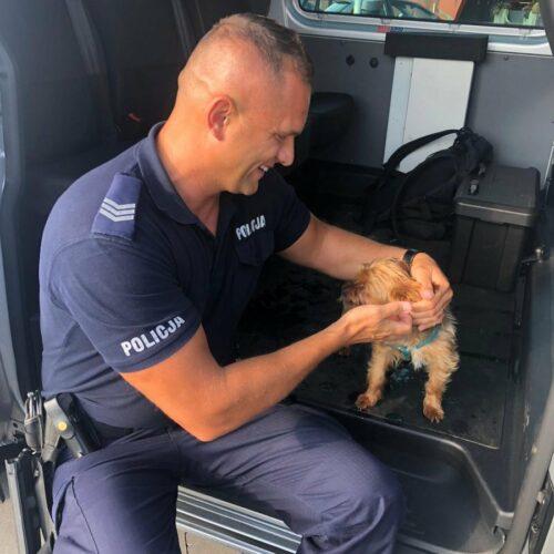 Policjanci uwolnili psa z nagrzanego samochodu
